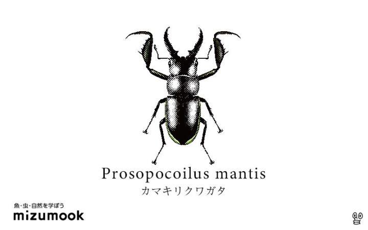 stag-beetle-2-prosopocoilus-mantis