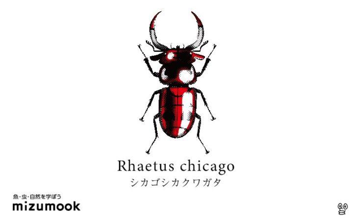 stag-beetle-2-rhaetus-chicago