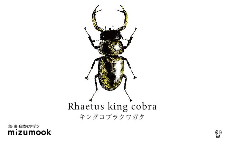 stag-beetle-2-rhaetus-king-cobra
