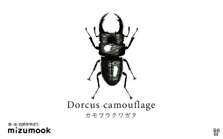 stag-beetle-3_dorcus-camouflage