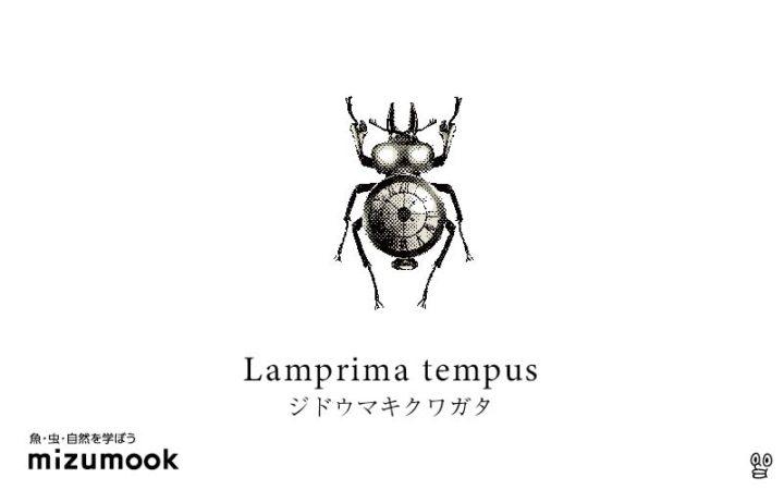 stag-beetle-3_lamprima-tempus