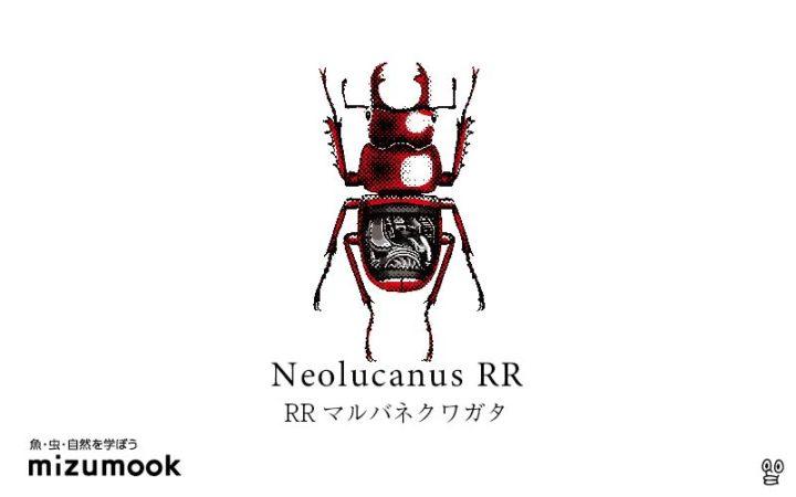stag-beetle-3_neolucanus-rr