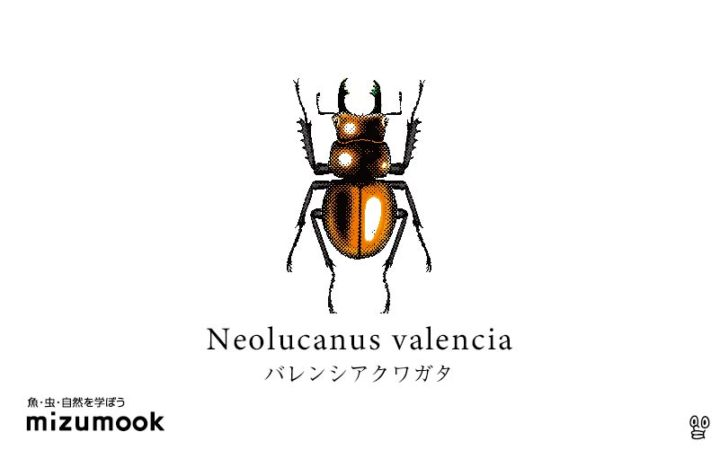 stag-beetle-3_neolucanus-valencia