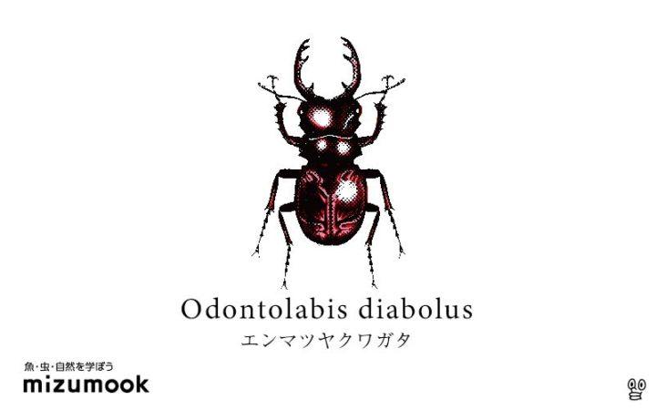 stag-beetle-3_odontolabis-diabolus