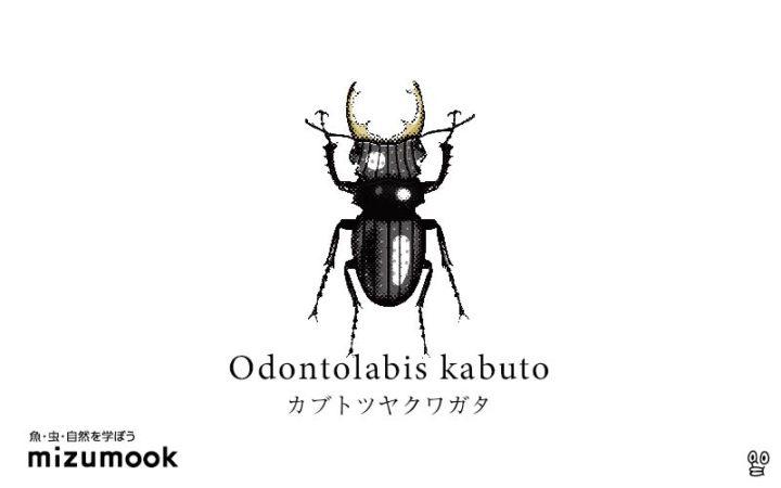stag-beetle-3_odontolabis-kabuto