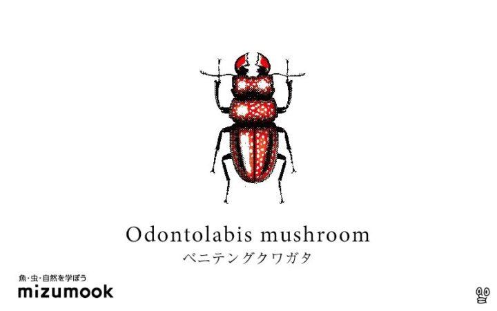 stag-beetle-3_odontolabis-mushroom