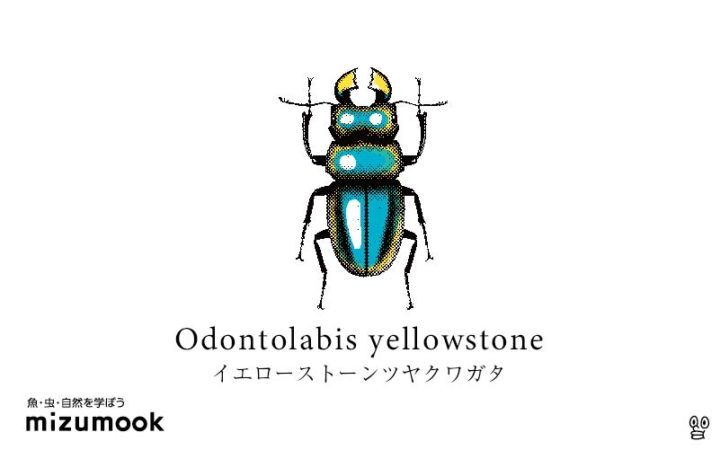 stag-beetle-3_odontolabis-yellowstone