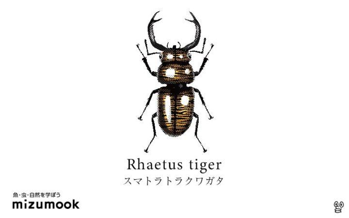 stag-beetle-3_rhaetus-tiger