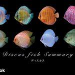 ディスカスの飼い方/混泳・大きさ・繁殖・種類・違い