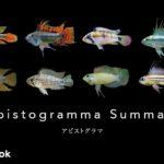 アピストグラマの飼い方/種類・飼育・繁殖・混泳・病気