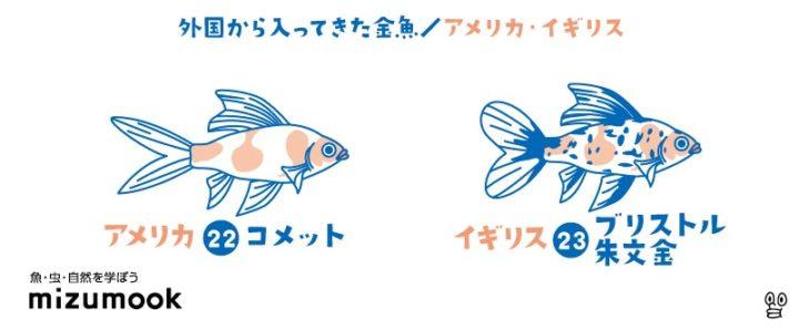 kingyo-family-tree_gaikoku-kingyo