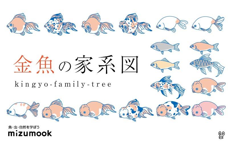 金魚の家系図!フナから金魚までの系譜を見てみよう/種類・歴史