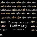 コリドラス全71種類をご紹介/飼い方・飼育・大きさ・種類