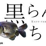 黒らんちゅうの飼い方/金魚・飼育・えさ・病気・種類