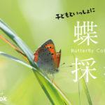 子どもといっしょに蝶々採集!/外遊び・昆虫採集・虫捕り