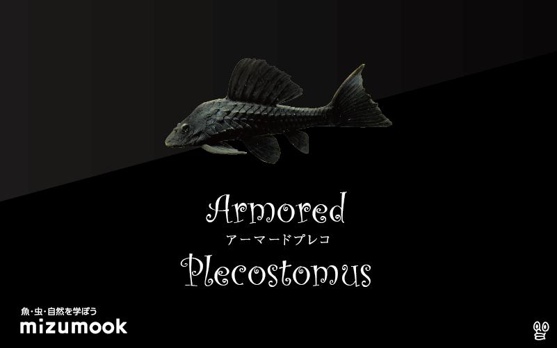 アーマードプレコの飼い方/飼育・混泳・繁殖