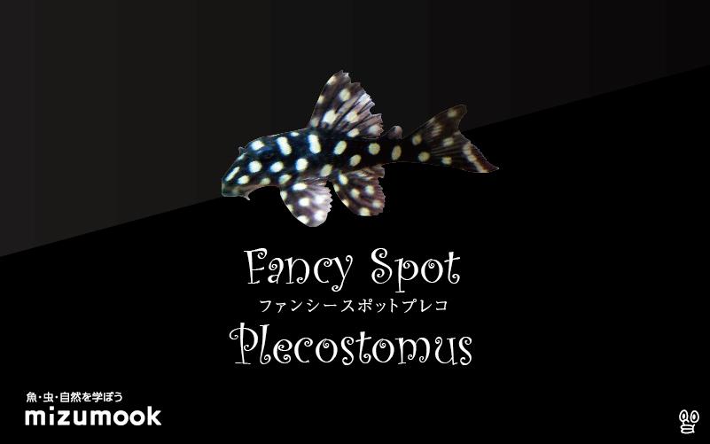 ファンシースポットプレコの飼い方/飼育・混泳・繁殖
