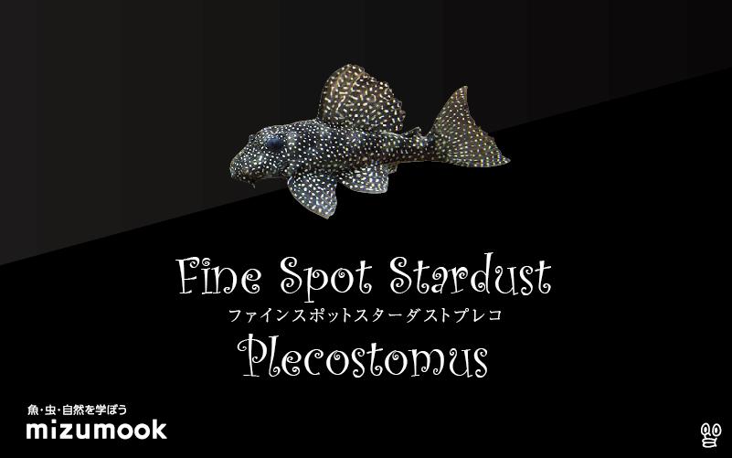 ファインスポットスターダストプレコの飼い方/飼育・混泳・繁殖