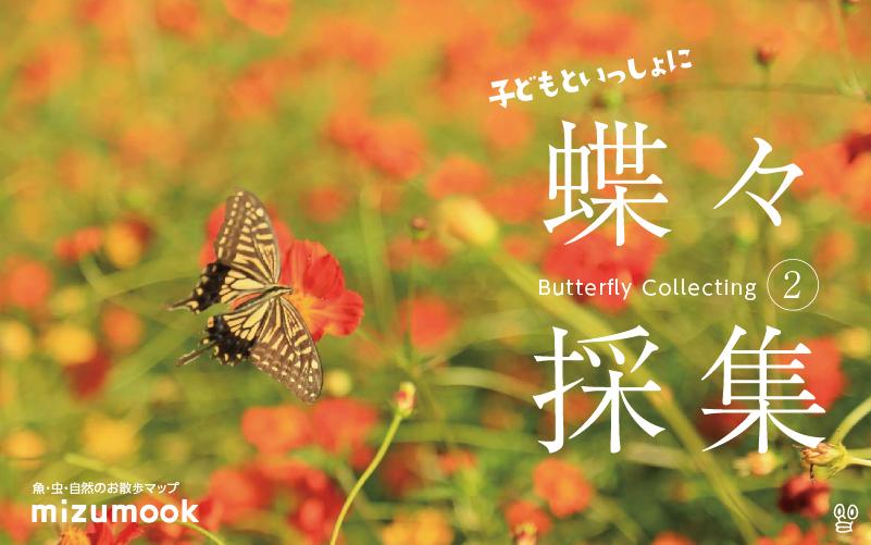 子どもといっしょに蝶々採集!/外遊び・昆虫採集・虫捕り・その2