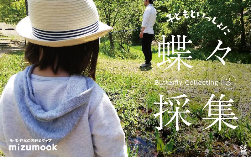 ついに大物ゲット!子どもといっしょに蝶々採集!その3/外遊び・昆虫採集・虫捕り